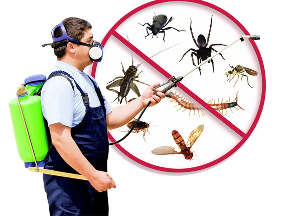 Fight Back With the Pest's Growth with the Aid of a Professional Companion  - Execute Pest Control
