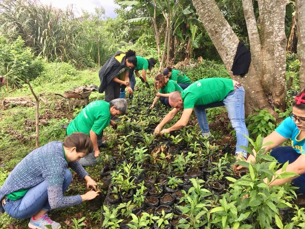 voluntariado-reforestacion