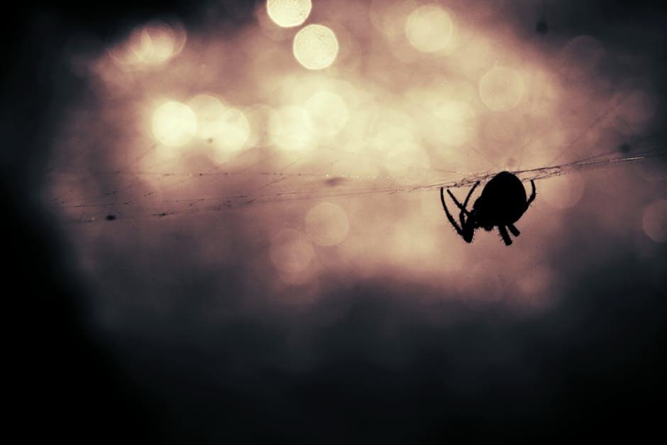 animal-silhouette-bokeh-insect.jpg