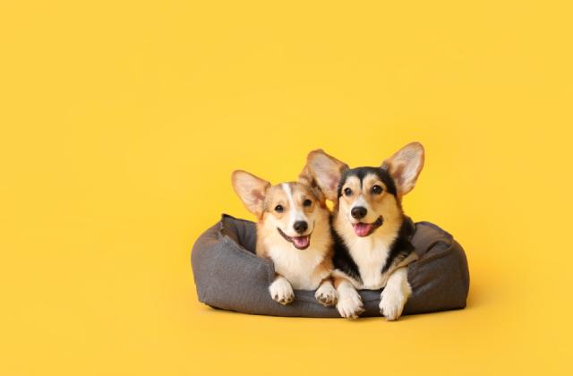 tạo thói quen ăn ngủ khoa học cho chó
