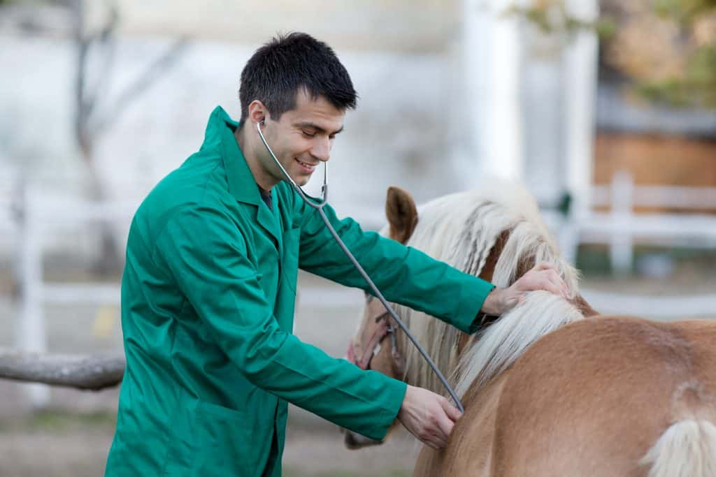 Equine vet wearing green coveralls.