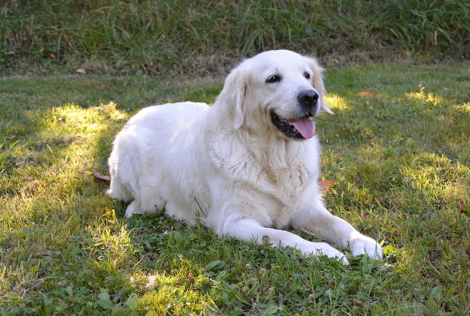 Pour apprendre la méthode passive pour mettre debout votre chien, soyez patient. Attendez qu'il se mette assis ou coucher avant de l'encourager à se relever.