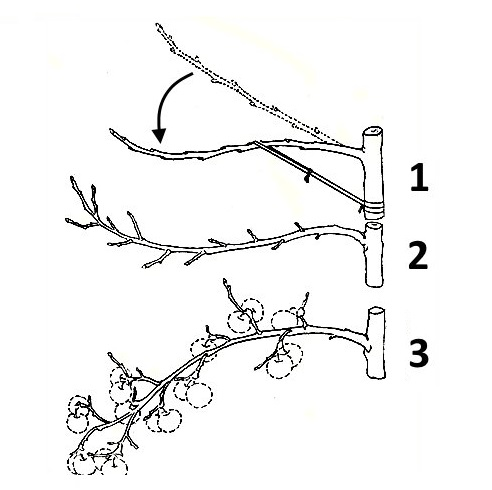 Отгибание ветвей
