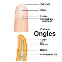 Ongles : définition - docteurclic.com