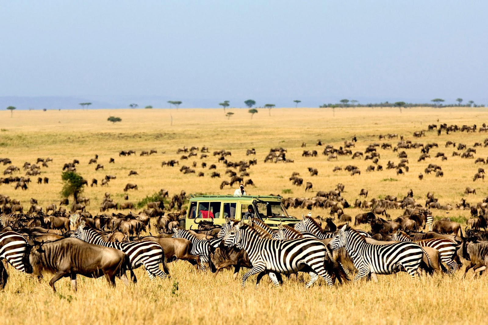The Great Migration - Serengeti National Park.jpg