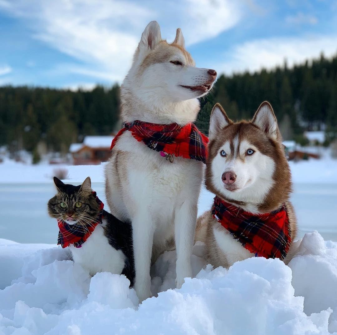 "🐕Lilo 🐕Infinity & 🐈Rosie on Instagram: ""Happy #nationalsiblingday !  Because you aren't siblings without a fail family ph… 