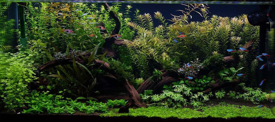 Image result for low tech planted tank
