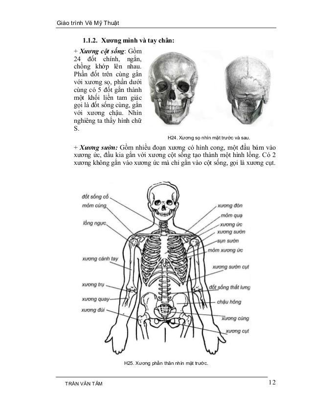 C:UsersG40-70Desktopmythuatarc.commythuatarcgiả phau cơcấu trúc cơ thểmy-thuat-1-12-638.jpg