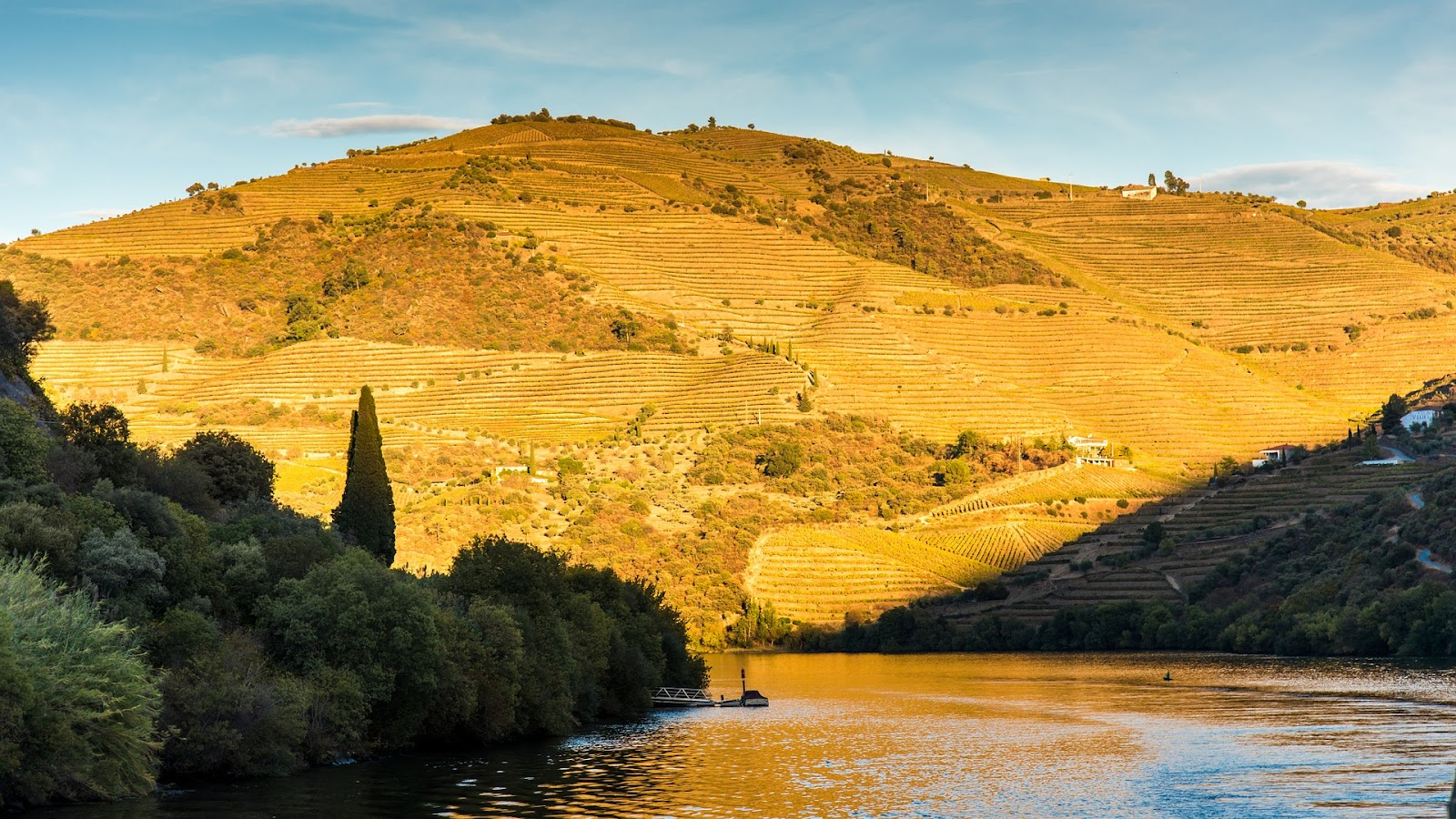 Sunbathed vineyard hill standing above Douro river, Portugal's wine regions