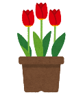 チューリップの鉢植えのイラスト
