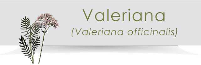 Ingredienti di Revit: la Valeriana