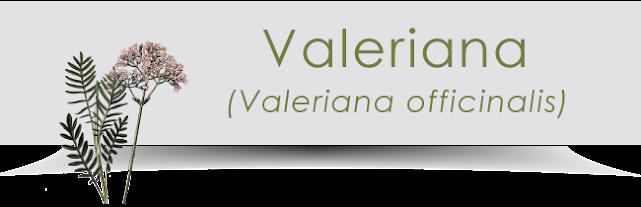 Ingredienti di Revit: la Valeriana