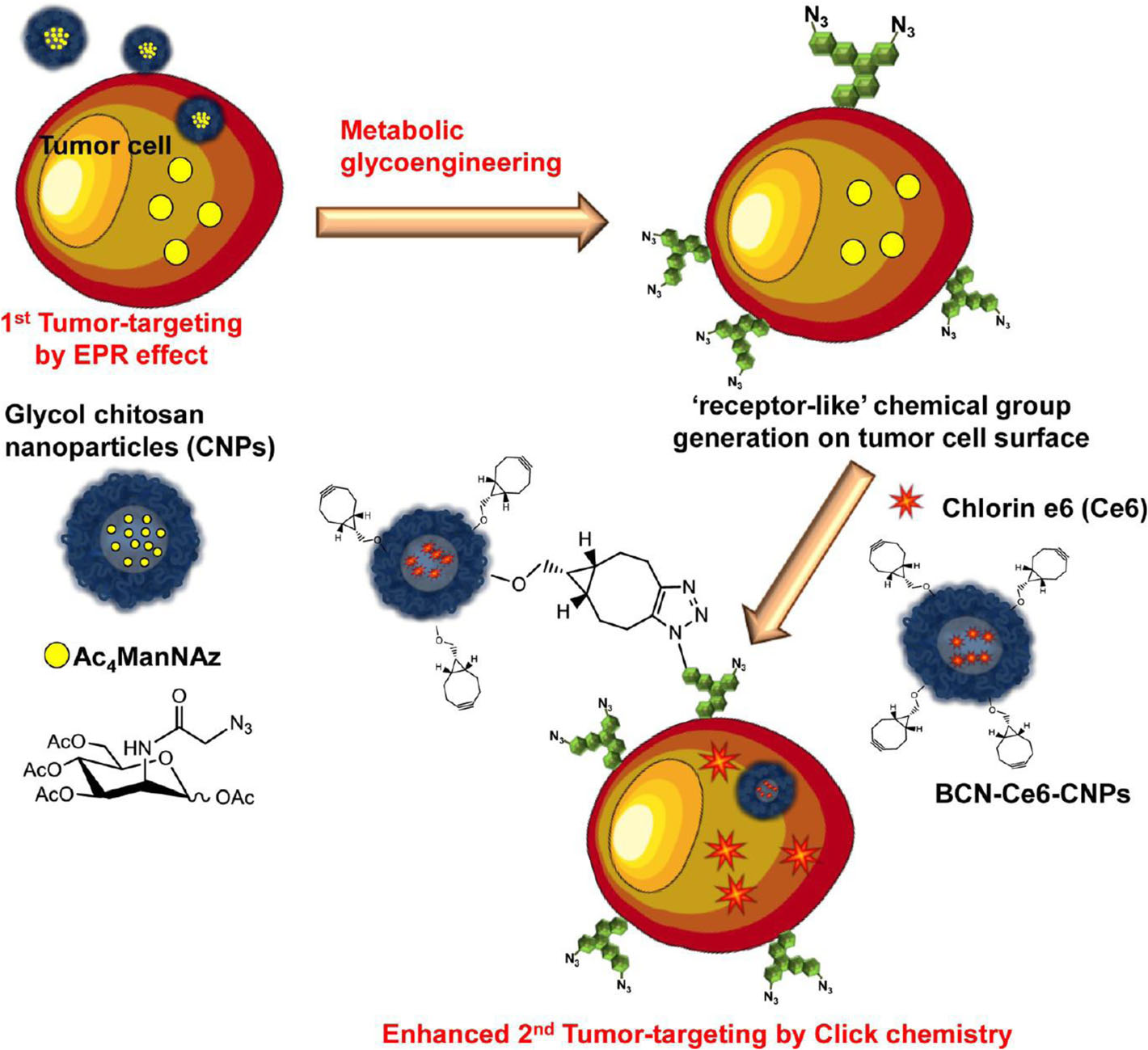 Tumor targeting with bioorthogonal click chemistry and chitosan nanoparticles