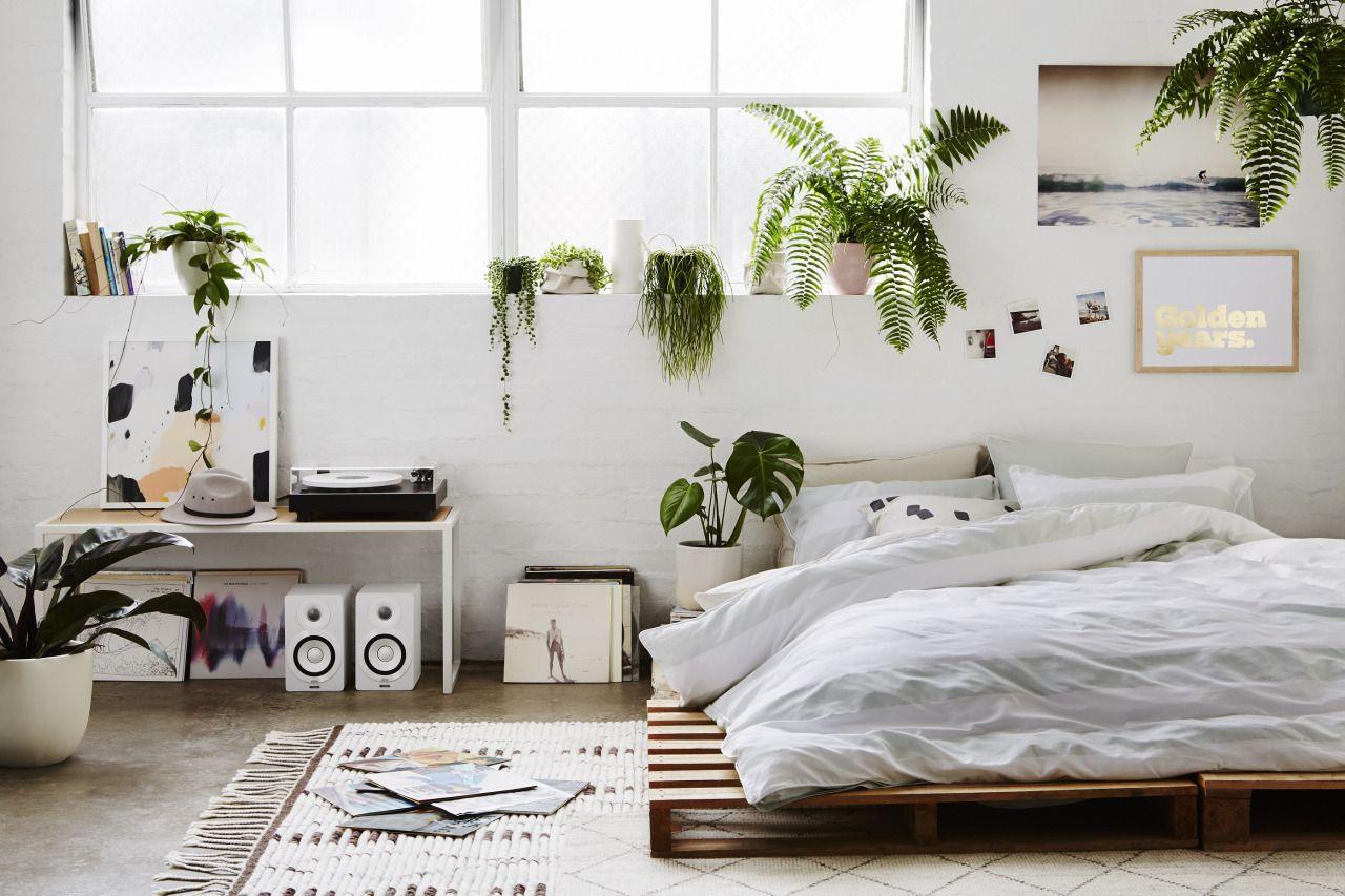 Phòng ngủ không nên trồng cây kiểng