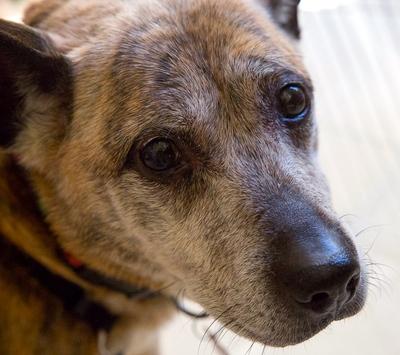 Senior Dogs Adoption Ontario