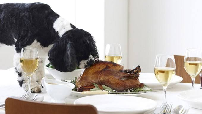 can dogs eat turkey