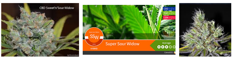 SUPER SOUR WIDOW MARIJUANA STRAIN WITH CBD