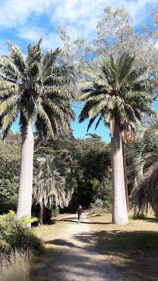 Brahea, Butia, Jubaea et Sabal (traitement fortement conseillé pour maintenir la biodiversité)