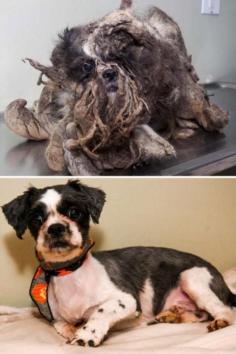 Perro con pelo enredado antes y después de ser rescatado
