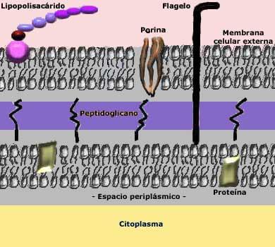 Estructura Bacteriana Alumnos Doc