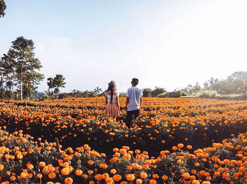 Bali-Honeymoon-ddlj-movement