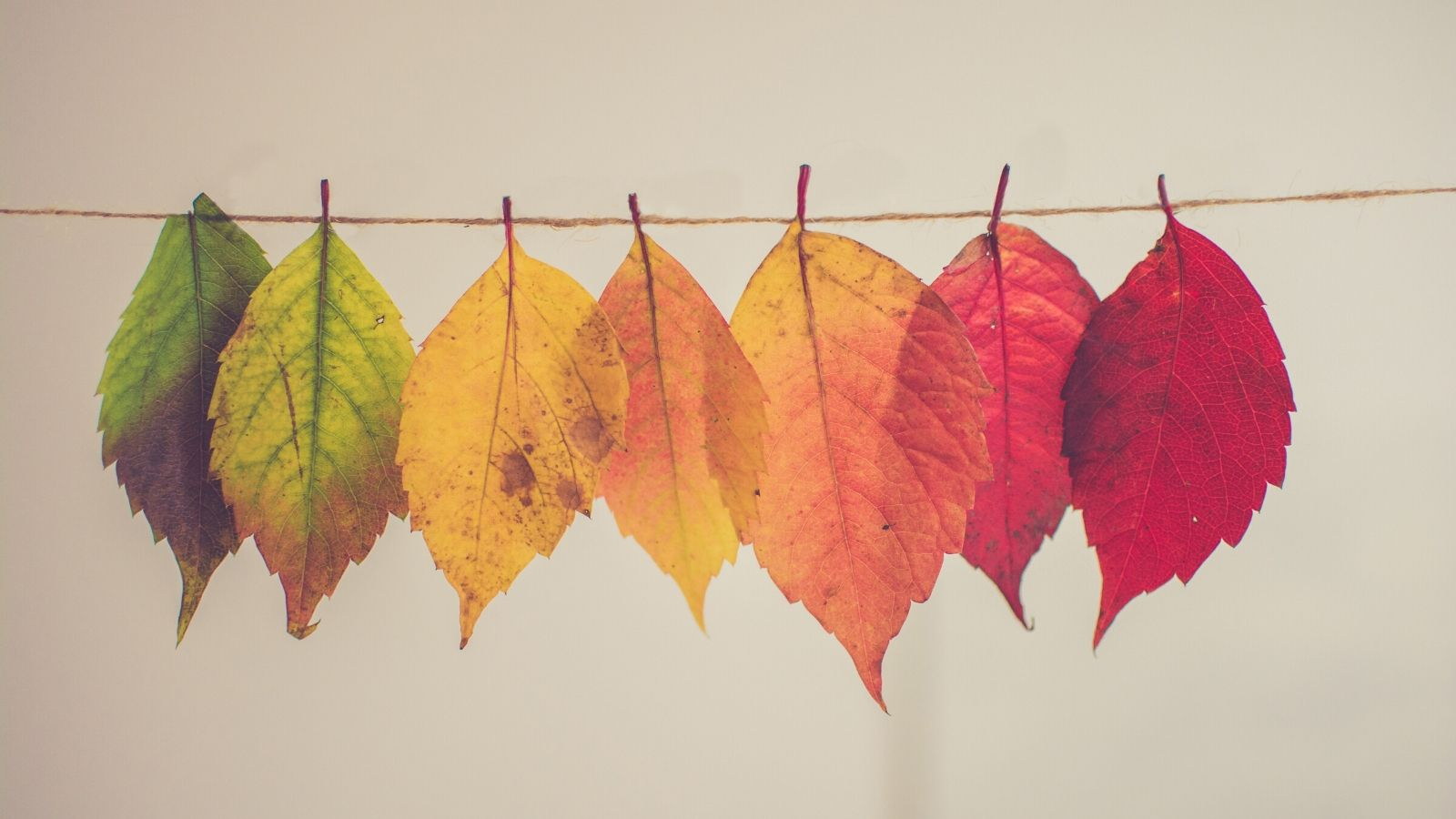 Autumn leaves and changing colours hanging off a string.