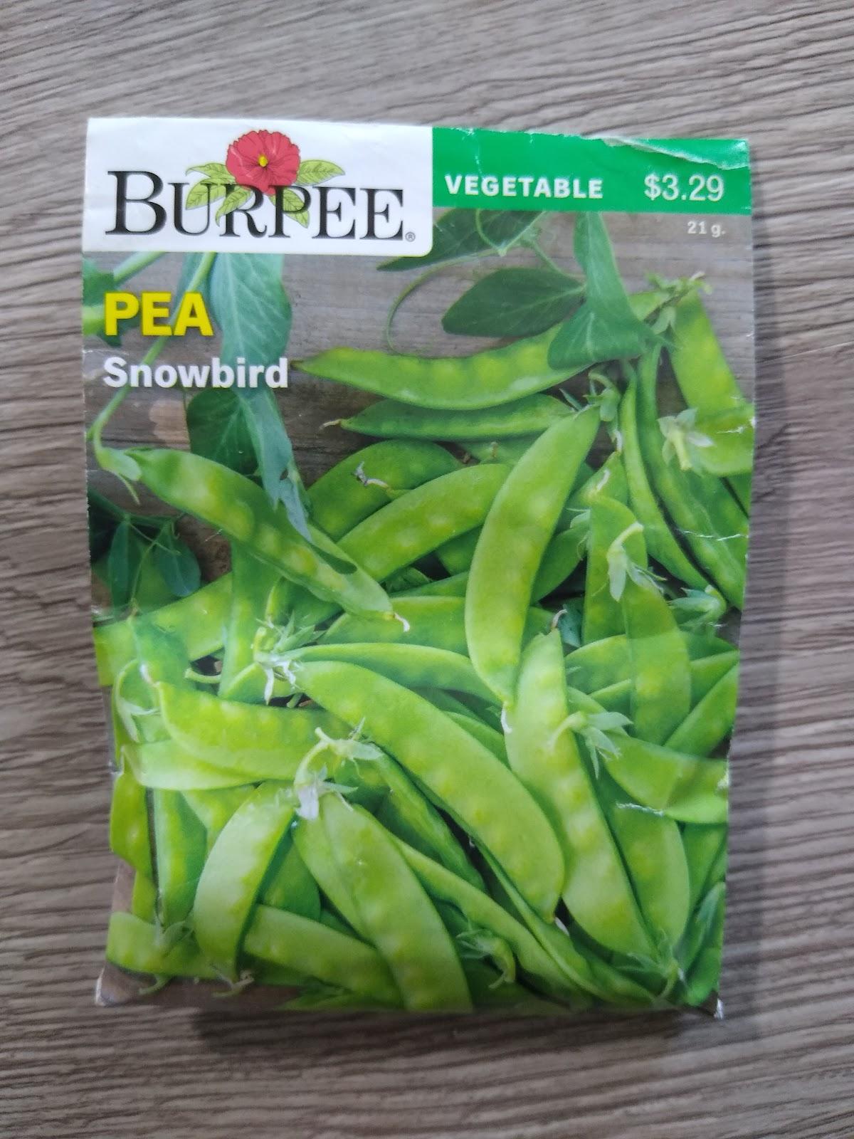 snowbird pea seeds picture