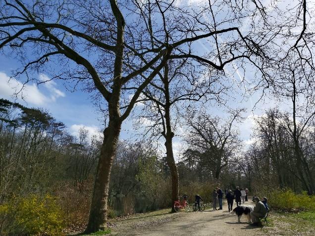 Caminho entre árvores  Descrição gerada automaticamente