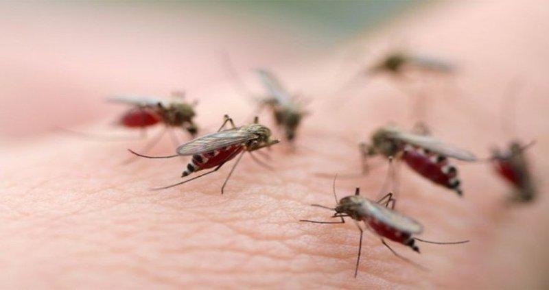 Dịch vụ diệt muỗi tận gốc an toàn, giá rẻ