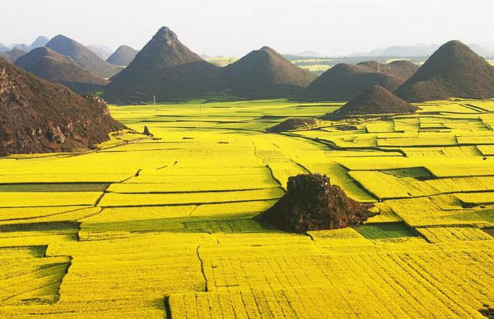 Resultado de imagen para La floración de colza en China