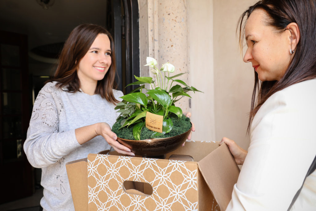 Plant-Parent Hamper
