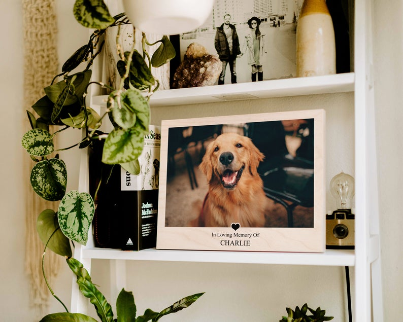 """A white shelf with various items and plants on it that also features a wooden plaque that looks like a Polaroid picture with a picture of a Golden Retriever and the text """"In loving memory of Charlie."""""""