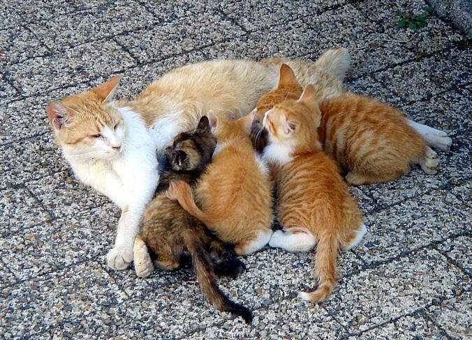A litter of kittens being
