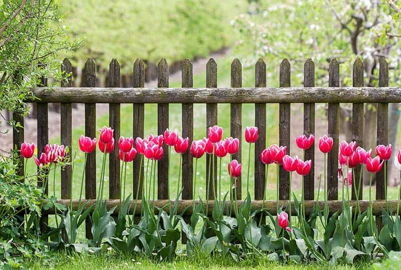 Good Vision Garden Fencing Idea