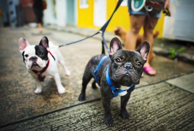 l paseo diario es parte de cuidar a tu mascota