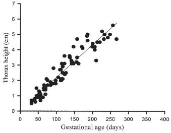 Évolution de la hauteur thoracique foetale du lama