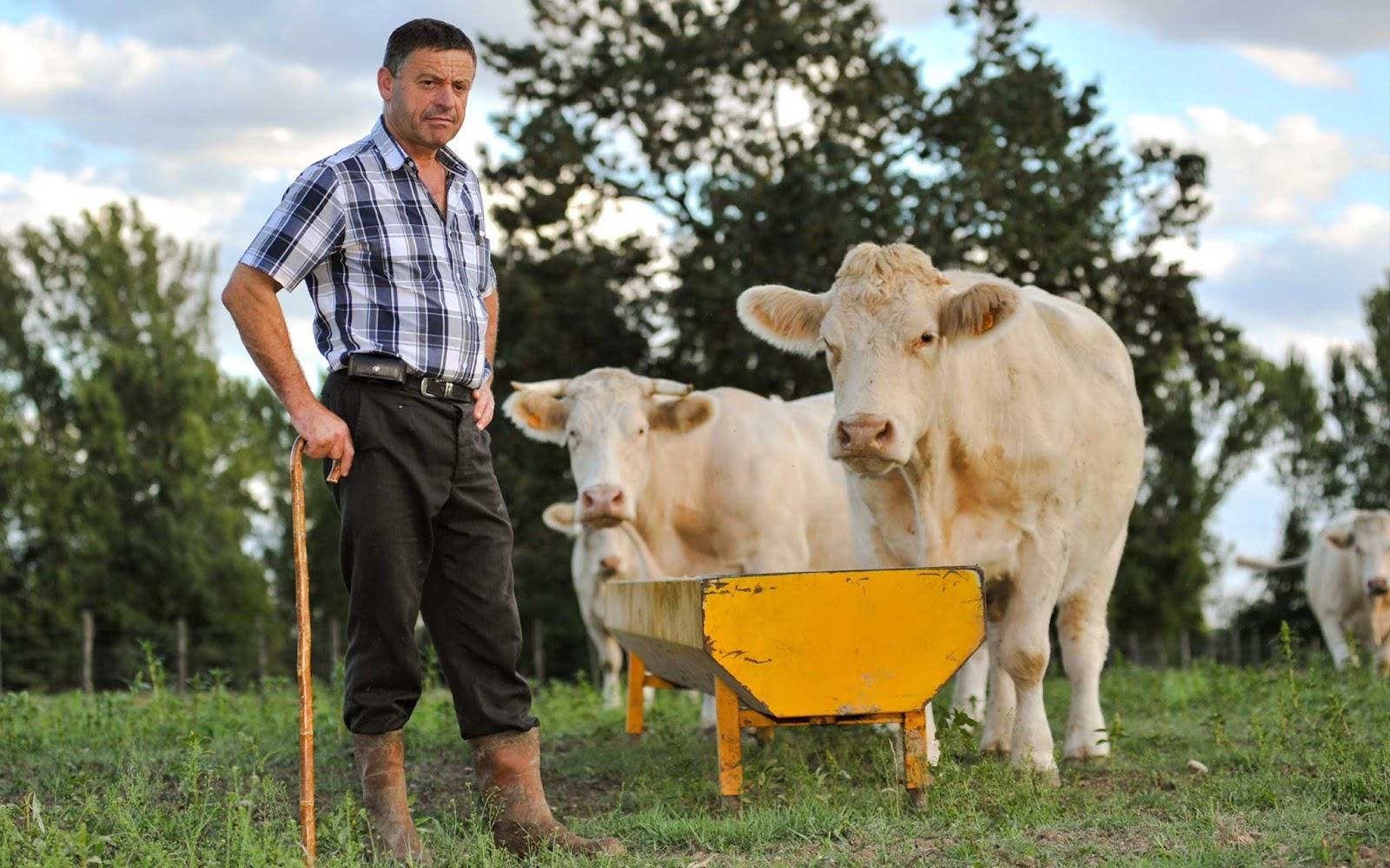 премиум корма для сельскохозяйственных животных