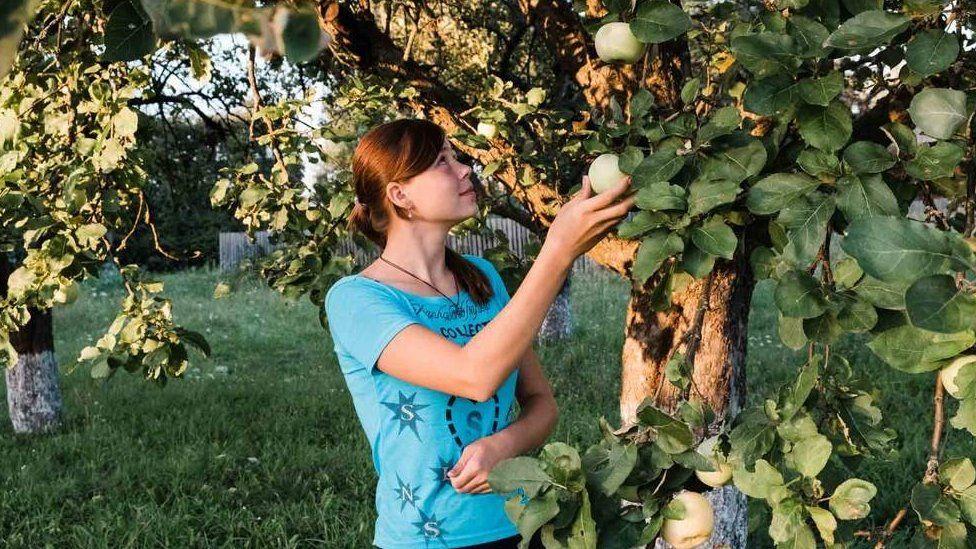 Алена собирает яблоки в семейном саду