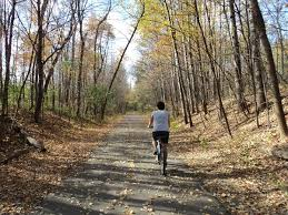 Image result for bike in woods
