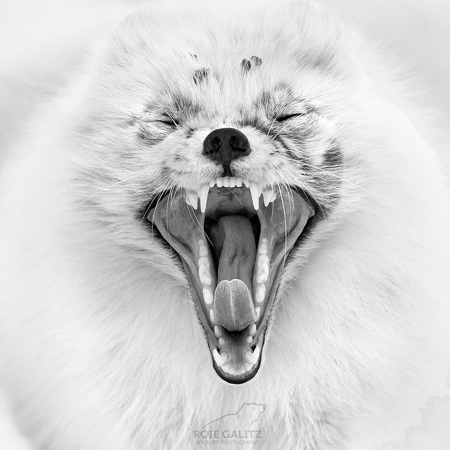 Photo shared by Roie Galitz - Wild Photography on December 07, 2020 tagging @gtechnology, @loweprobags, @nikonrussia, @nikoneurope, and @gitzoinspires. Image may contain: 1 person.