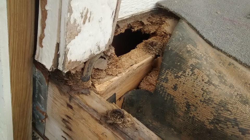 Porch, Repair, Damage, Wood, Exterior, Home, Deck