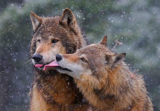 animal love 5
