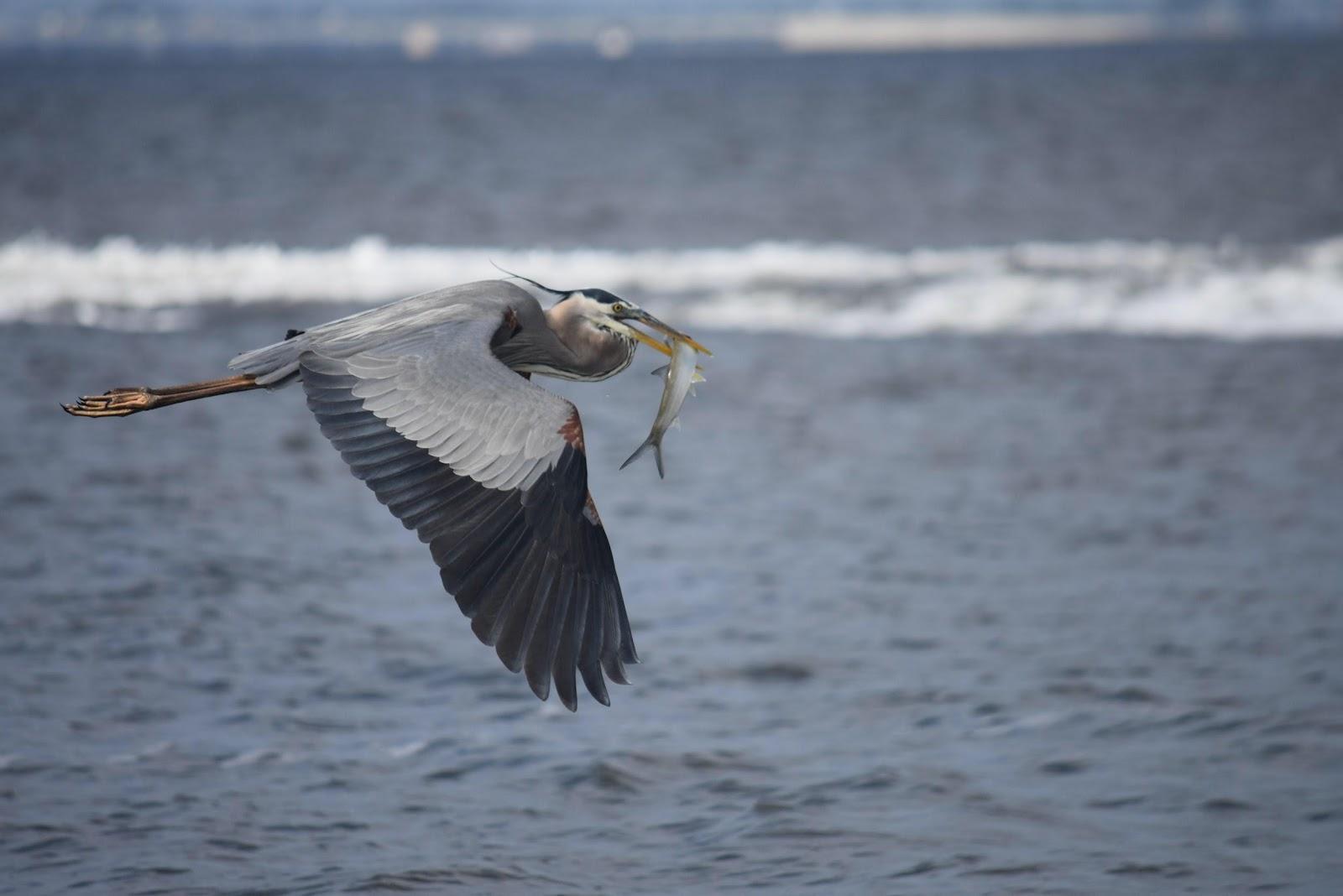 bird flying with fish