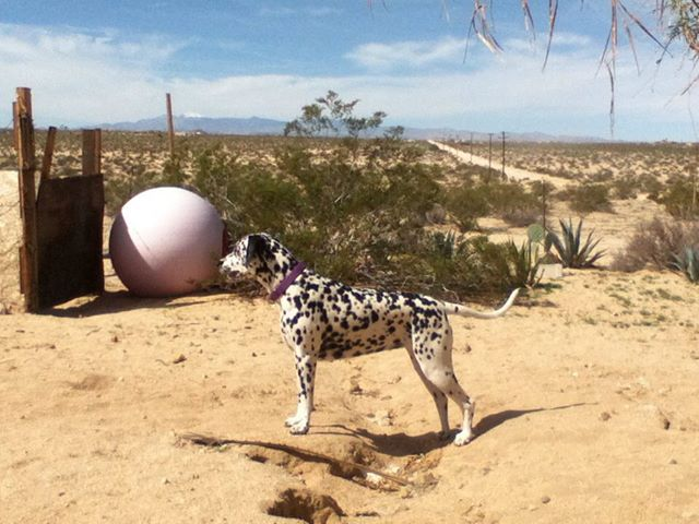 'We just got back Home after being away for about a month. Cassie stayed in Tucson with   Mark and Paula while I took Greyhound buses to Tampa Florida to see Family there. It feels mighty good to be back home in good old Joshua Tree California!'
