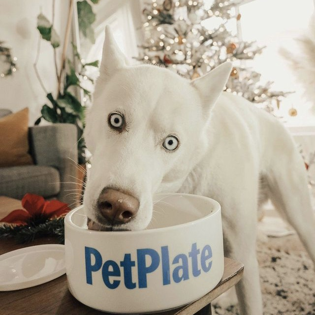 Pet Plate Dog Food Review