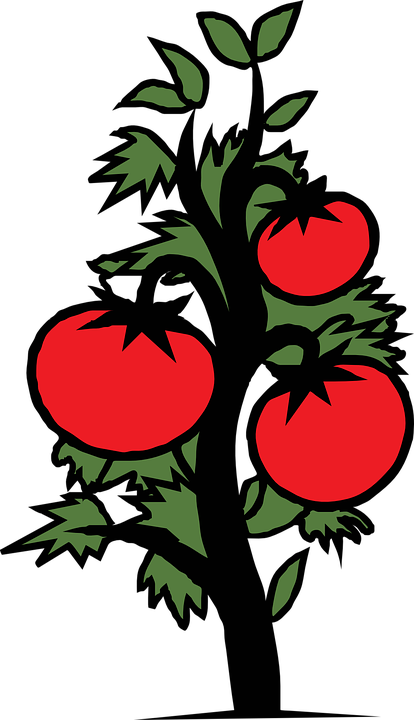 Free vector graphic: Tomato, Plant, Vegetable, Sick - Free Image ...