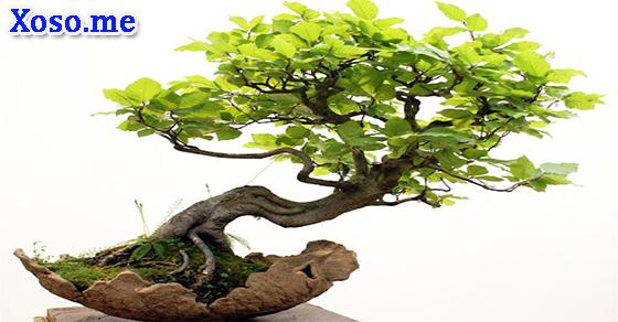 Điềm báo của giấc mơ cây xanh