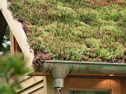 extenzivna zelena strecha, zelena strecha svojpomocne, zelena strecha postup, sukulenty, kaktusy, odvodnovaci system