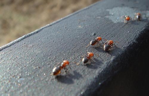 consejos plagas insectos