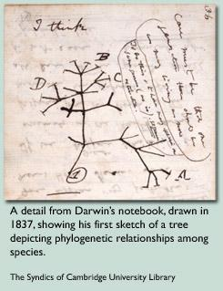 What is the Tree of Life? | Tree of Life : Exhibits : Yale Peabody ...